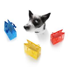 sale shopping dog