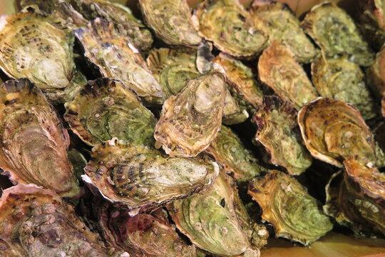 Frische Meeresfrüchte, Normandie