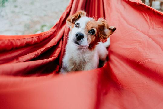 Cute dog lying on orange hammock