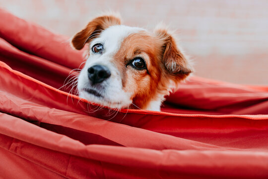 Cute puppy relaxing in orange hammock