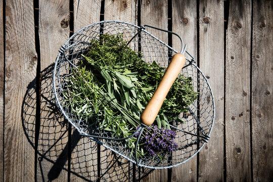Basket with freshly harvested herbs