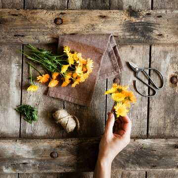 Hand of woman preparing to tie yellow blooming marigolds