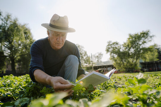 Wrinkled man with book examining crop against clear sky during sunny day