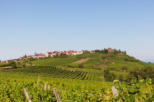 France, Haut-Rhin, Riquewihr, Clear sky over countryside village and surrounding vineyards in summer