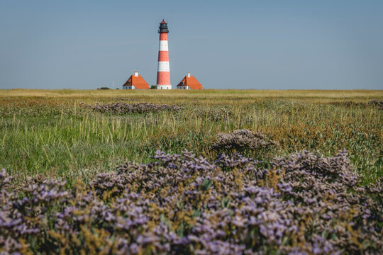 Germany, Schleswig-Holstein, Westerhever, Springtime meadow with Westerheversand Lighthouse in background