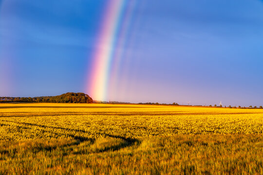 Rainbow arching over yellow countryside field at dusk