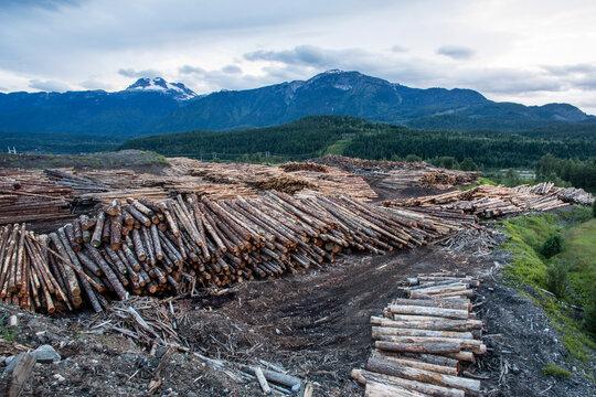 Logging in lumber yard in Revelstoke