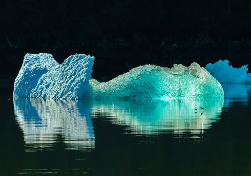 Birds dancing on water surface with icebergs floating in background