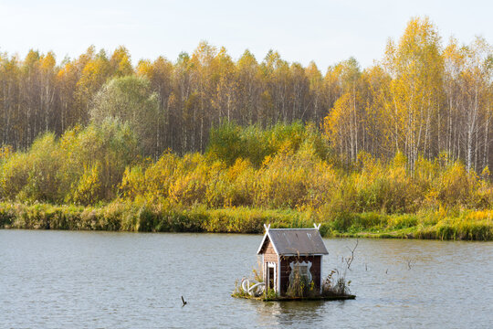 Swan house on the lake with autumn forest background