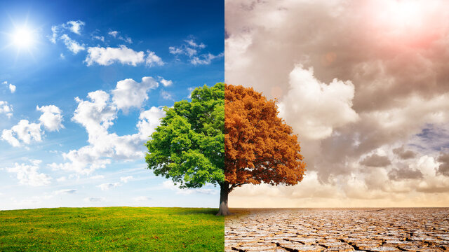 A global warming concept image showing the effect of arid land with tree changing. Concept of climate change. Live and dead big tree, land with dry and cracked ground and green field.