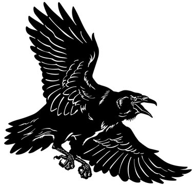 A raven in flight. Flying black bird. Hand drawn crow. Tattoo. Isolated vector illustration