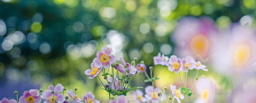 Beautiful wild flowers purple wild floral garden in morning haze in nature close-up macro. Landscape wide format, landscape banner as artistic image. Relaxing, romantic blooming flowers, love romance