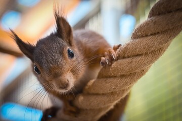 squirrel rodent tree mammal animal
