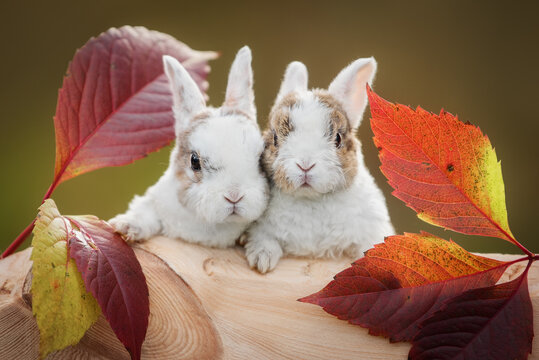 Two little rabbits in autumn