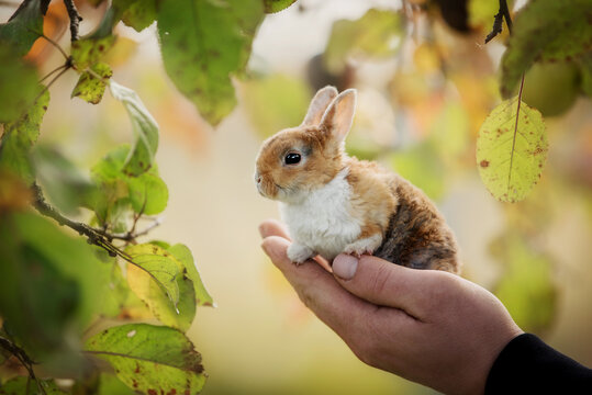 Little rabbit sitting in the palm of the hand in autumn
