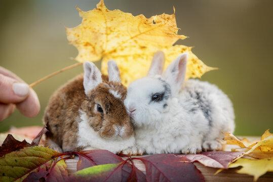 Two little rabbit in autumn