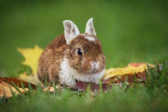 Little rabbit outdoors in autumn