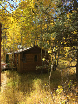 Scenic vertical view of a cabin in the woods, surrounded by fall colors