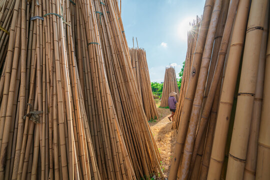 Piles of dry bamboo in tradional craft village in Vietnam