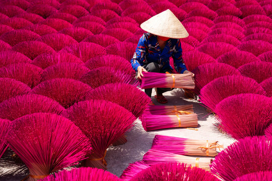 Vietnam incense sticks are drying under sunlight, with Vietnamese woman in connical hat working outdoor