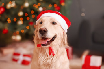 Cute funny dog in Santa hat at home on Christmas eve