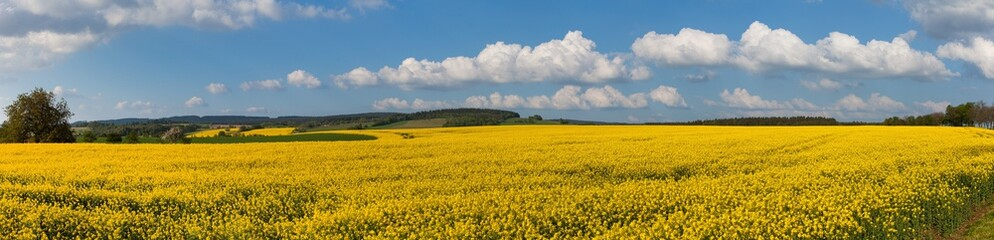 Photo sur Plexiglas Bleu jean Rapeseed canola or colza field panorama landscape