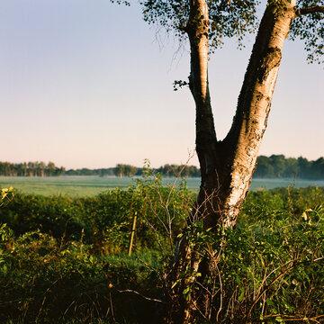 Farn im Gegenlicht. Wald, Herbst