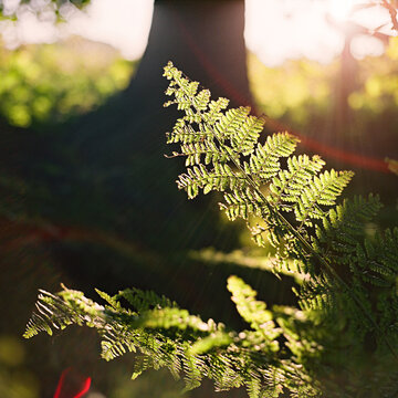 Lichtstimmung, Farn, Wald