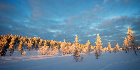 Photo sur Plexiglas Bleu jean Snowy panoramic landscape at sunset, frozen trees in winter in Saariselka, Lapland, Finland