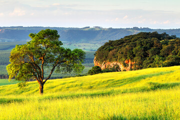 landscape with cliff and trees - Brotas - South America - Brazil