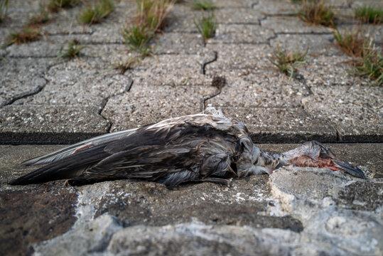 A dead bird at the beach of Wilhelmshaven