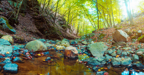 Colorful autumn forest and river landscape