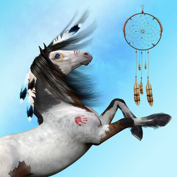 Indian Pony - The Indian Pony of the United States is a combination of the Spanish Barb, Arabian, Mustang, and Appaloosa.