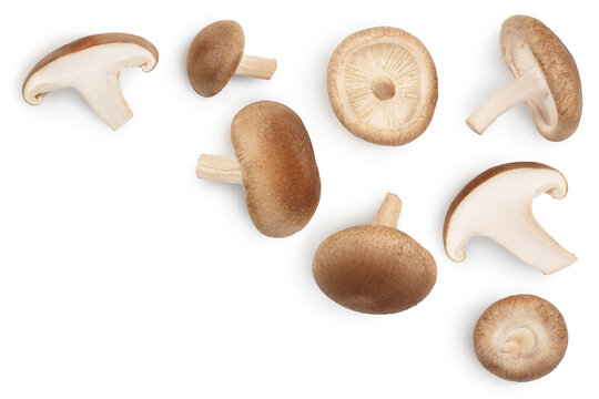 Fresh Shiitake mushroom isolated on white background with clipping path. Top view with copy space for your text. Flat lay