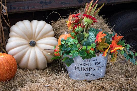 pumpkins and flowers - harvest season - fall - October