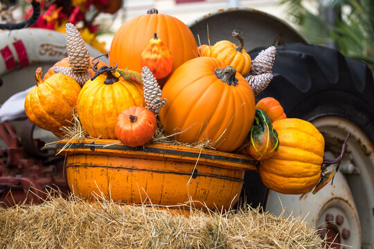 pumpkins and gourds decor - Fall - Harvest season