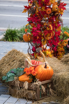 pumpkin and autumn leaves decoration at Miracle Mile in Miami