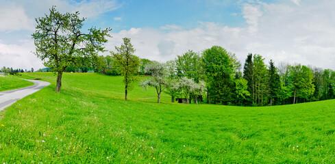 panoramic view of a meadow on hills with apple trees near schaefffern in the austrian region steiermark