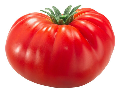 Ripe heirloom wrinkled beefsteak tomato (Solanum lycopersicum fruit)  isolated