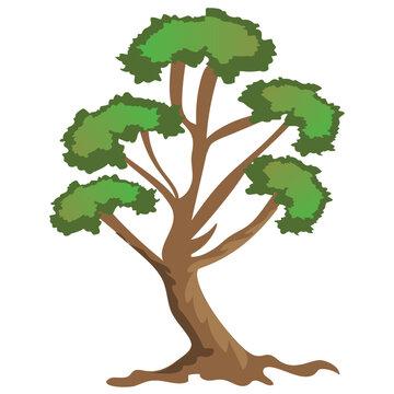 river birch tree, decorative tree flat icon