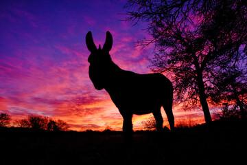 Mini donkey silhouette with sunrise sky background.