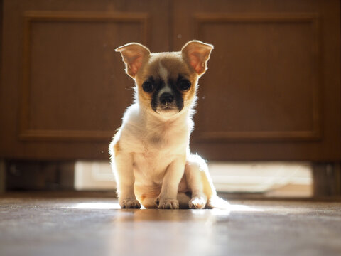 Portrait of a small dog in the sunlight