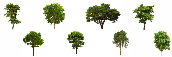 isolated tree green set is located on a white background.Collection of isolated tree green on white...