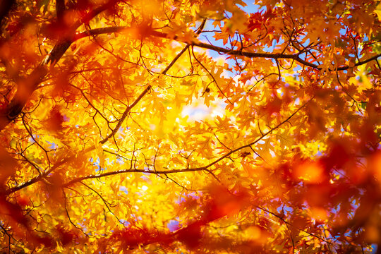 Multi colored autumn leaves on sunny sky background, colorful golden tree in fall