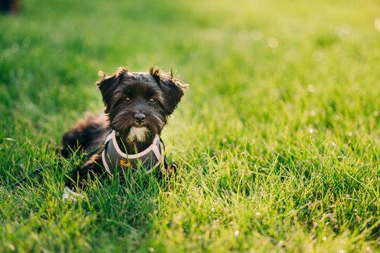 Kleiner Hund auf Wiese