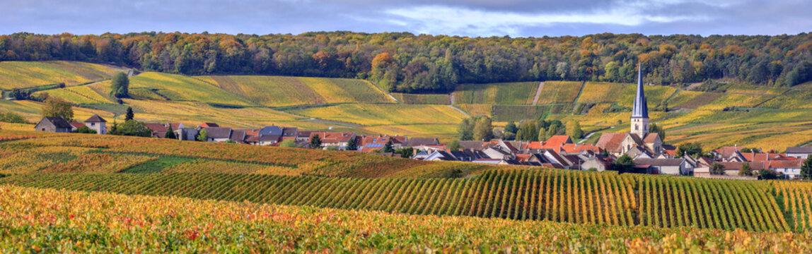 Champagne, the vineyards around Chamery
