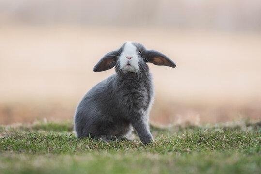 Little funny decorative fold rabbit outdoors