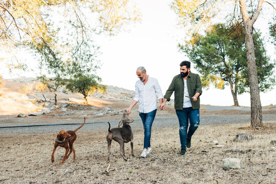 Couple of mature men laughing and holding hands walking in nature on an autumn afternoon while walking with their dogs