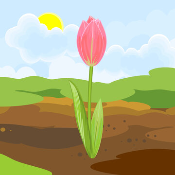 Blooming tulip plant with pink flower and green leaves growing from the ground on background of spring landscape
