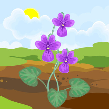 Blooming violet plant with purple flowers and green leaves growing from the ground on background of spring landscape